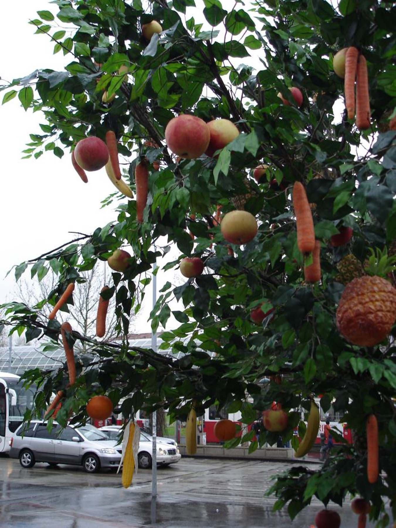Baum Closeup